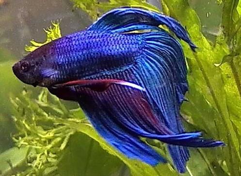 Моя рыбка ;)